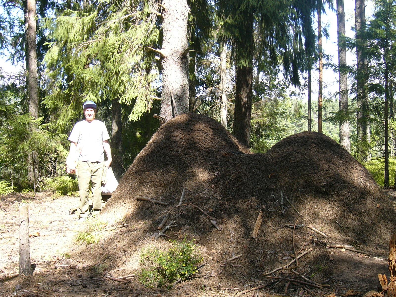 Как избавиться от муравьев в огороде 38